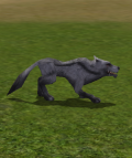 Alpha Grey Wolf.png