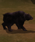 Cursed Black Bear.png